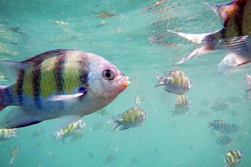 jona fish