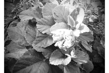 TW20150724_094004-EFFECTS